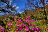 櫻你而在 陽明山公園:DSC_0453_調整大小.JPG