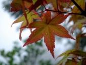 松濤營地動植物5-14:DSC02553.JPG