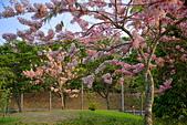 春色滿園 花旗木:DSC_0385_調整大小.JPG