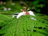 松濤營地動植物5-14:DSC02540.JPG
