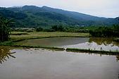 剪山水農場1-2-2010:IMG_0077.JPG
