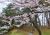 日本櫻花見:7CB4F20C-DA58-4EBE-B8DF-40E2AA6A66AC_調整大小.jpg