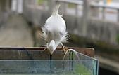 遇見 白鷺鷥:DSC_0218_調整大小.JPG