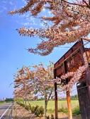 三月櫻~熱力綻放 花旗木:IMG_20200327_085804_調整大小.jpg
