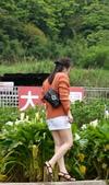 竹子湖 海芋季 大賞園:DSC_0355_調整大小.JPG