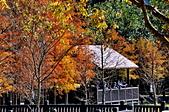 湖岸落羽松 原住民文化主題公園:DSC_0124_調整大小.JPG