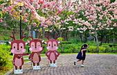 春色滿園 花旗木:DSC_0431_調整大小.JPG
