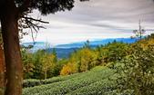 大崙山茶園:DSC_0925_調整大小.JPG