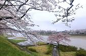 日本櫻花見:7DFEFAD0-09A6-4486-9DF6-B403399DFD8E_調整大小.jpg