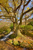 櫻你而在 陽明山公園:DSC_0486_調整大小.JPG