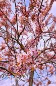 2020 與春天有約 三月 花旗木:IMG_20200327_090340_調整大小.jpg