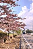 三月櫻~熱力綻放 花旗木:IMG_20200327_085825_調整大小.jpg