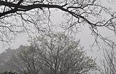 陽明山花季雨中:_DSC0061.JPG