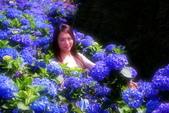 萬紫千紅 繡球花: