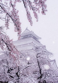 日本櫻花見:8baf8a479265a4d4802f8a7393c829b3_調整大小.jpg