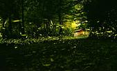 華梵大學 螢火蟲之夜:Firefly_210427_2c_調整大小.jpg