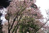 北新莊-太陽鳥:DSC03436.JPG