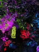 石岡 花漾藝術燈會:IMG_20210212_205204_調整大小.jpg