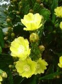 松濤營地動植物5-14:DSC02552.JPG