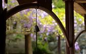 粗坑窯 紫藤:DSC_9720_調整大小.JPG