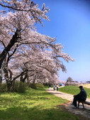日本櫻花見:09C92C05-046B-4EE1-A4D5-19DB99C9A6B6_調整大小.jpg