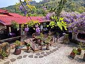 粗坑窯 紫藤:IMG_20210319_121056_調整大小.jpg