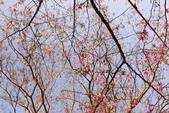 楓湖櫻花雪:DSC_0007_調整大小.JPG