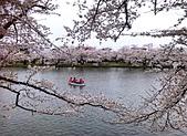 日本櫻花見:9EDC301D-F226-4886-9295-EDCC8750DF81_調整大小.jpg