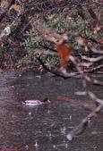 雨中 湯湖:DSC_0786_調整大小.JPG