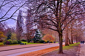 英國 白金漢宮 公園:DSC_0272_調整大小.JPG