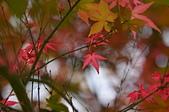 台北 奧萬大 槭紅:DSC_0060_調整大小.JPG