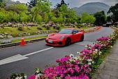 陽明山 櫻花:DSC_0123_調整大小.JPG
