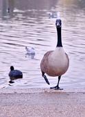 英國 白金漢宮 公園:DSC_0485_調整大小.JPG