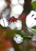 台北 奧萬大 槭紅:DSC_0087_調整大小.JPG