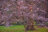 英國 白金漢宮 公園:DSC_0523_調整大小.JPG