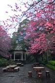 陽明山 後山公園 櫻花:DSC_0199.jpg