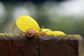 小蝸牛的早晨:DSC_6231_調整大小.JPG