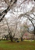 弘前公園 櫻花祭 花見:3CE01B45-36E5-4791-AC93-32A9B4C0E901_調整大小.jpg