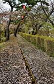弘前公園 櫻花祭 花見:3E2DF018-D9CD-49DE-B073-D533B139BE59_調整大小.jpg