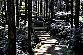 溪頭 景觀 2/27:_DSC0064.JPG