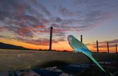 秋之 淡水夕陽:DSC_0056_調整大小.JPG