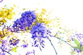 紫籐霧雨:DSC_6348_調整大小.JPG