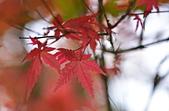 台北 奧萬大 槭紅:DSC_0059_調整大小.JPG