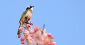 春色滿園 花旗木:DSC_0362_調整大小.JPG
