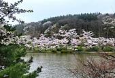 日本櫻花見:5F525F29-5B95-4618-9259-467E52B88FBA_調整大小.jpg