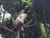 淡水國小的 貓:IMG_20200317_172226_調整大小.jpg