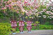 春色滿園 花旗木:DSC_0378_調整大小.JPG