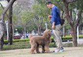 大型貴賓犬:DSC_2810_調整大小.JPG