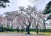 日本櫻花見:6F9D1ACC-7D63-4A56-A07B-CBEAD94367D0_調整大小.jpg