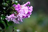 動植物-萬瑞森林12-25:IMG_0142.JPG